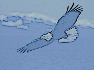Falke am Himmel